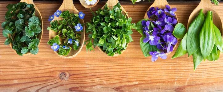 edible herbs