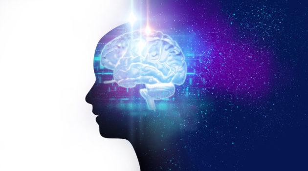 virtual human brain 3d